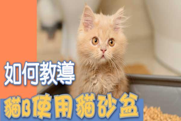 如何教導貓B使用貓砂盆