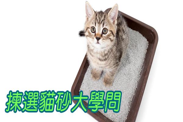 貓砂揀得好,主人無煩惱