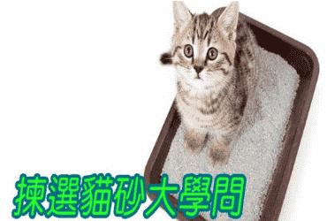 如何選貓砂?貓砂揀得好,主人無煩惱