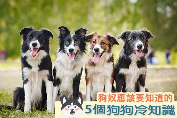 5個狗狗冷冷冷知識