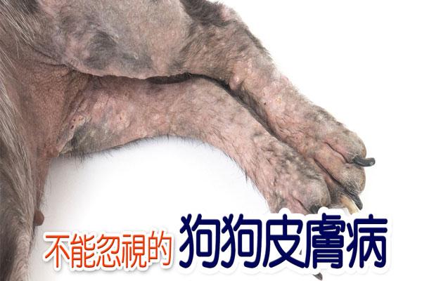 狗狗常見皮膚病識多D
