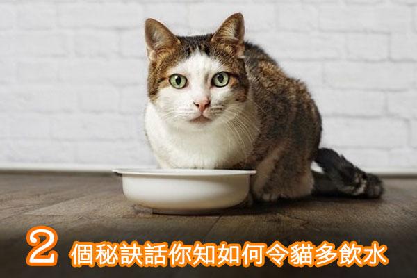 如何令貓多飲水?2個秘訣話你知‼️