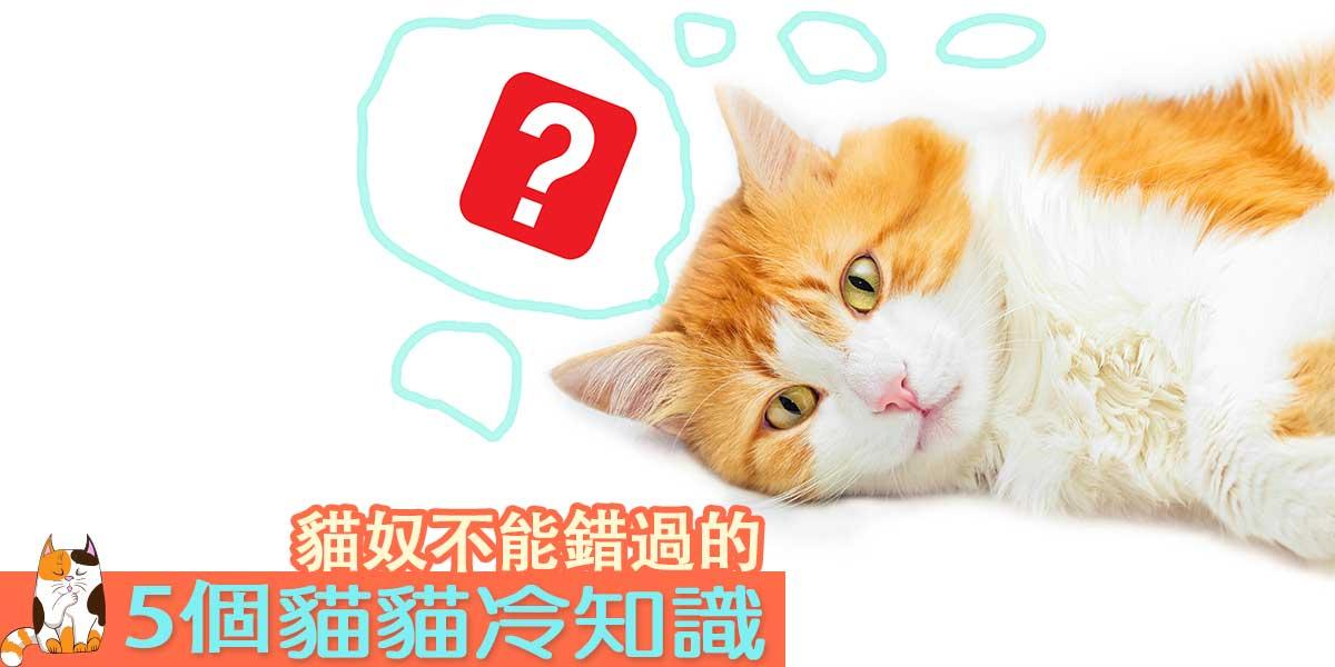 貓貓冷知識